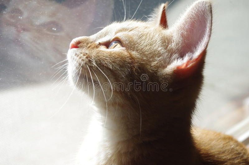 Gato alaranjado com reflexão fotografia de stock royalty free