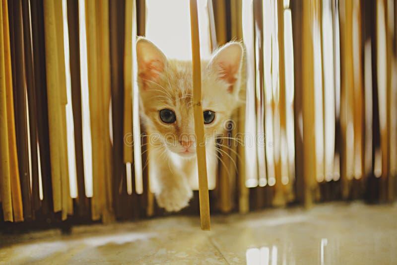 Gato alaranjado do bebê que olha a câmera imagem de stock royalty free