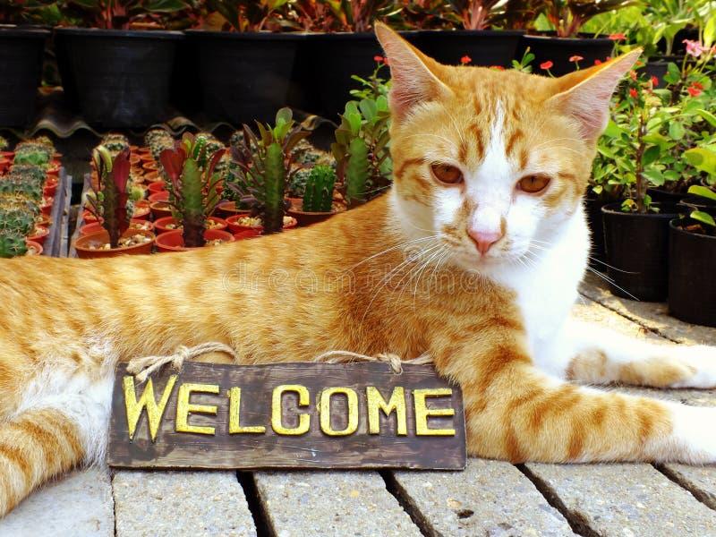 gato-alaranjado-do-gatinho-que-senta-se-