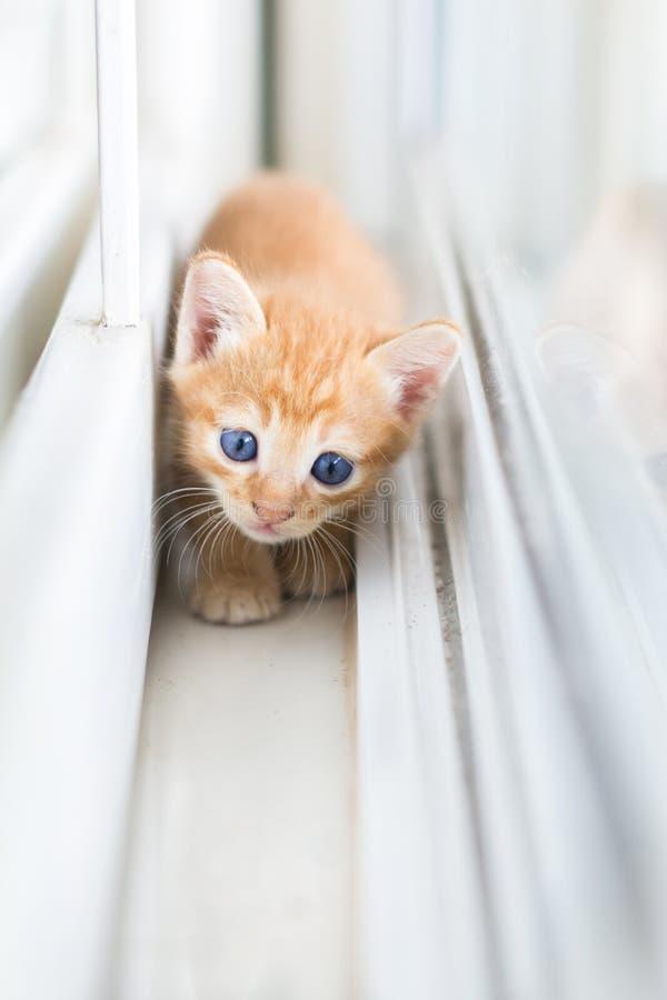 Gato alaranjado, gatos, animais, animais de estimação, vaquinha, gatinhos, gatos felinos, pequenos, alaranjados fotografia de stock royalty free