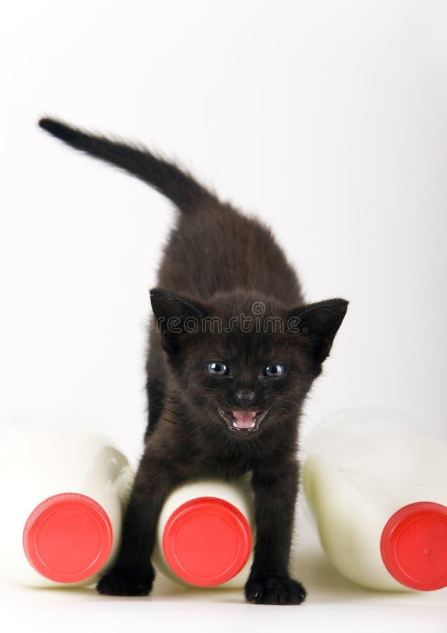 Gato & leite imagens de stock