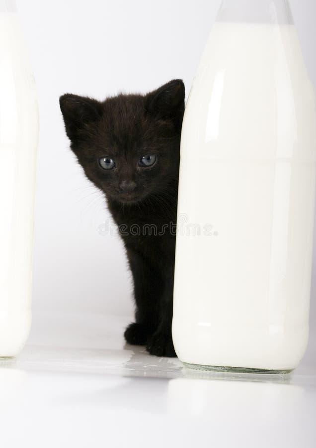 Gato & leite fotografia de stock royalty free