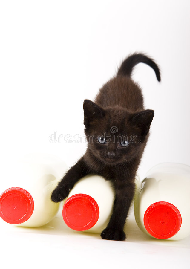 Gato & leite imagem de stock