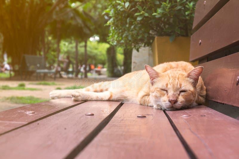 Gato anaranjado claro que duerme en un banco de madera imagenes de archivo