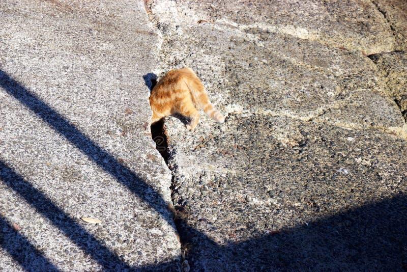 Gato anaranjado que empuja la cabeza en el agujero en rampa concreta foto de archivo libre de regalías