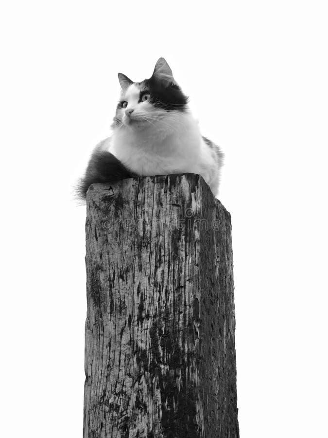 Gato ansioso encima de una cerca Post imagen de archivo libre de regalías