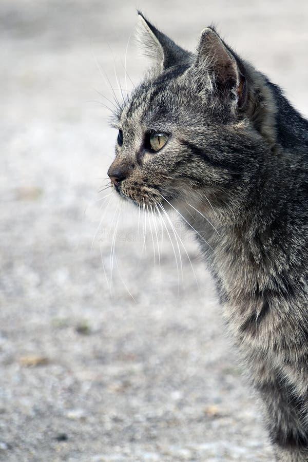 Gato ao ar livre foto de stock