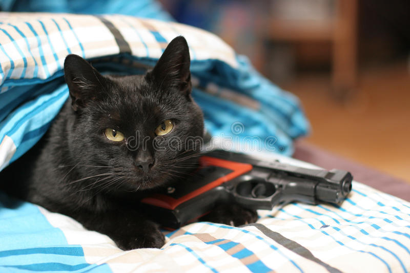 gato armado imagenes de archivo