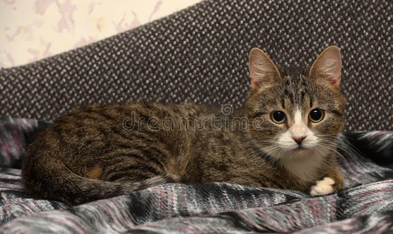 Gato atigrado joven foto de archivo