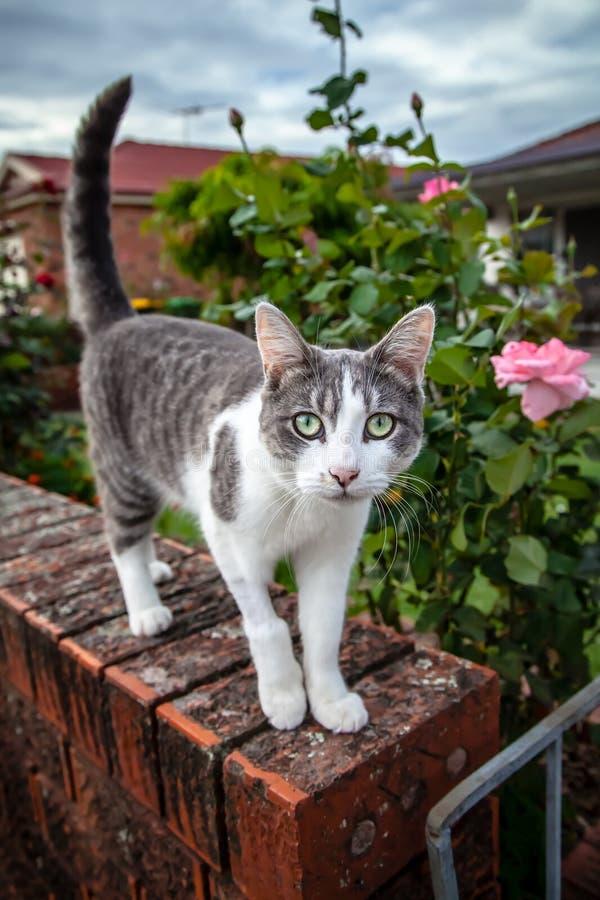Gato atigrado y gato blanco en la puerta de un jardín imagen de archivo
