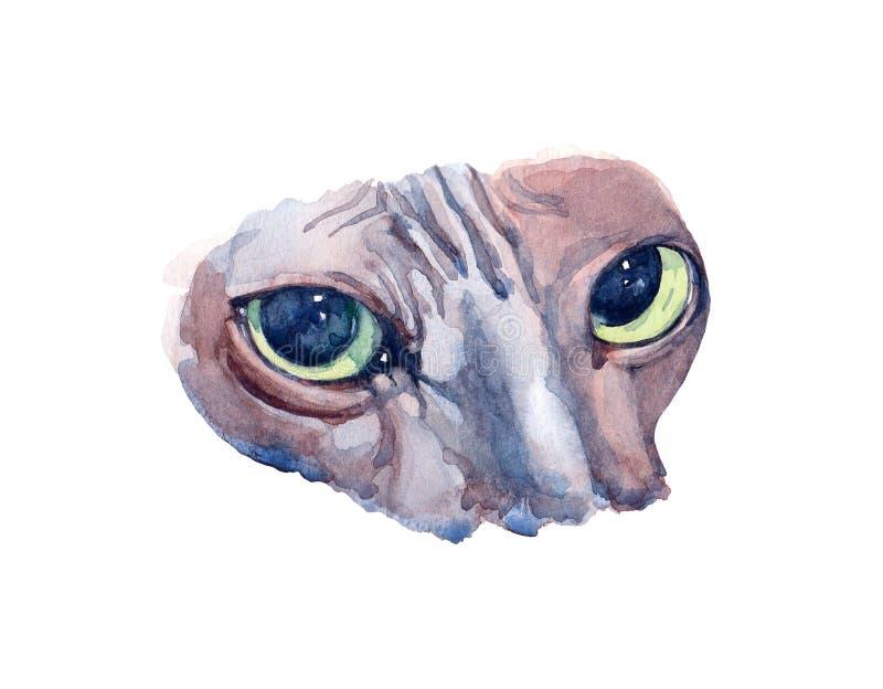 Gato azul de Sphynx con los ojos verdes que se colocan en perfil en el CCB blanco ilustración del vector