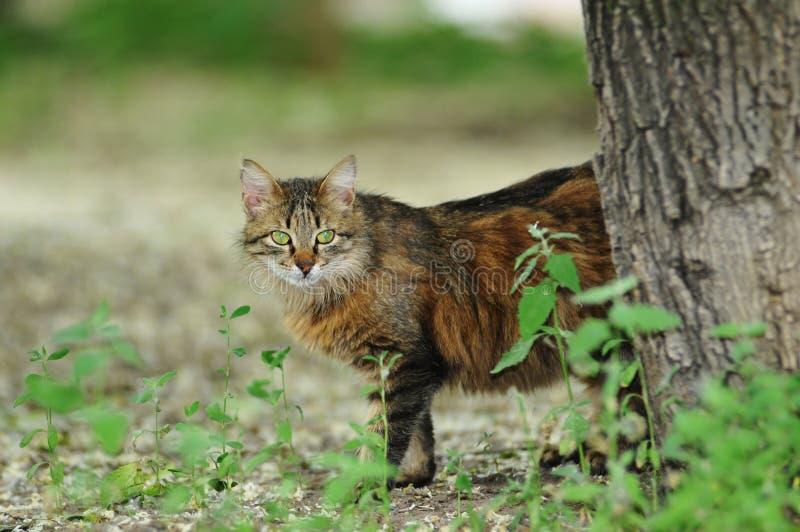Download Gato Bastante Perdido Que Mira De Detrás árbol Foto de archivo - Imagen de verano, lindo: 41901124