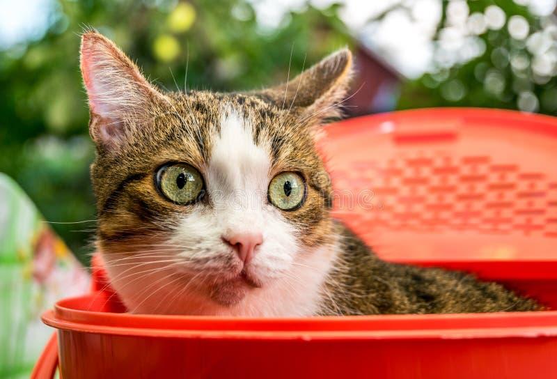 Gato bem conservado com os grandes olhos bonitos imagem de stock