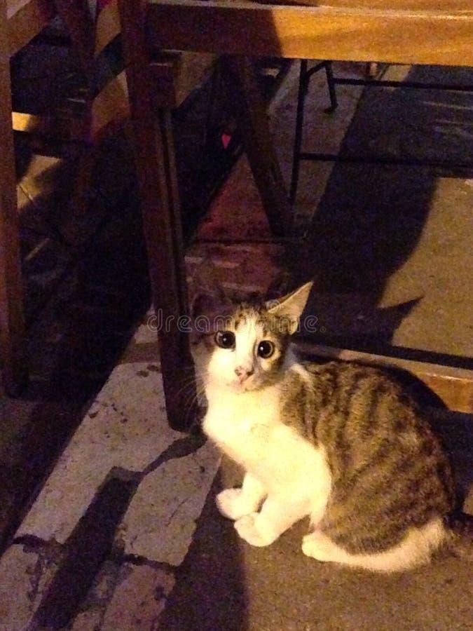 gato bizco fotos de archivo libres de regalías