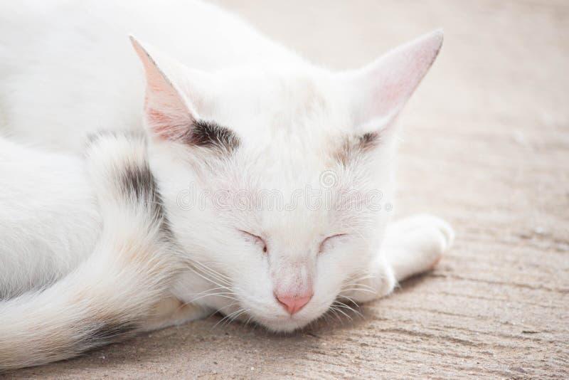 Gato blanco fotos de archivo