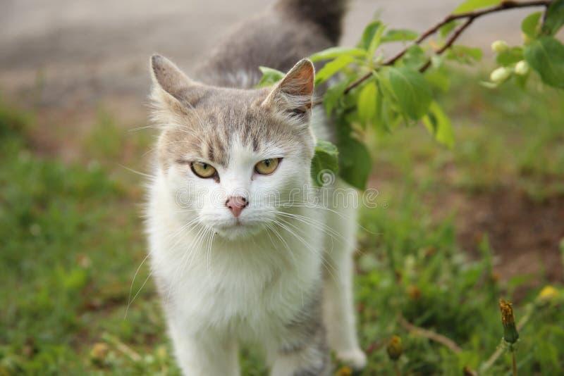 Gato blanco cerca de una rama con las hojas verdes imagen de archivo libre de regalías