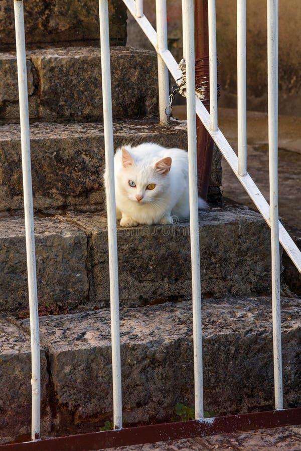 Gato blanco con el ojo bicolor detrás de barras foto de archivo libre de regalías