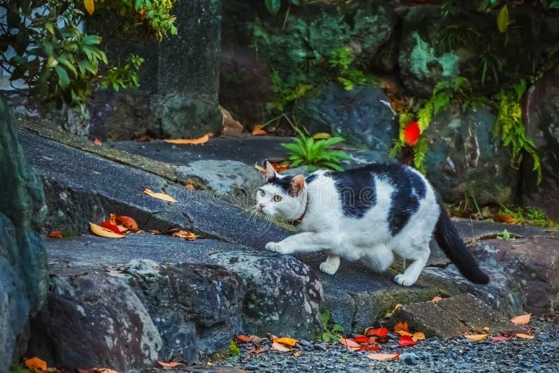 Gato blanco con las marcas negras imagen de archivo