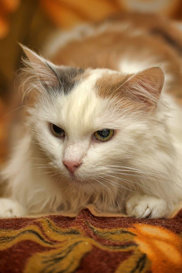Gato blanco con los puntos rojos y grises imagen de archivo libre de regalías