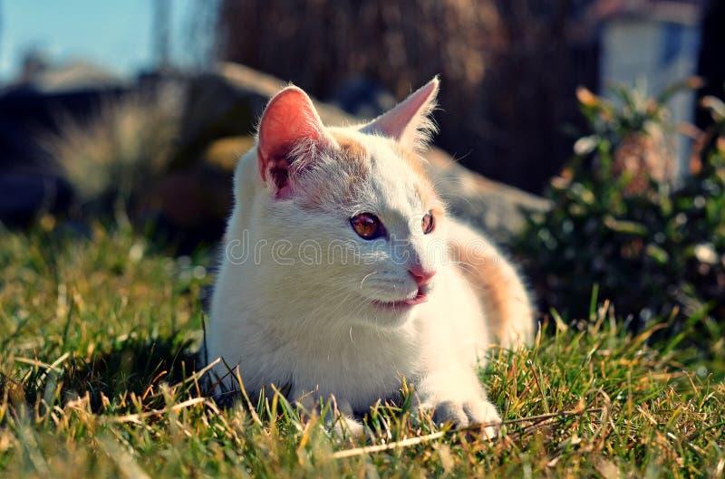 Gato blanco curioso lindo fotografía de archivo