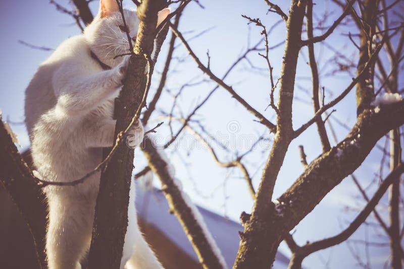 Download Gato Blanco En El árbol Del Invierno Filtrado Foto de archivo - Imagen de filtro, estación: 64211500