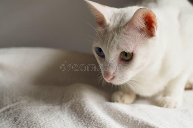 Gato blanco en el día de fiesta blanco de la cama junto foto de archivo