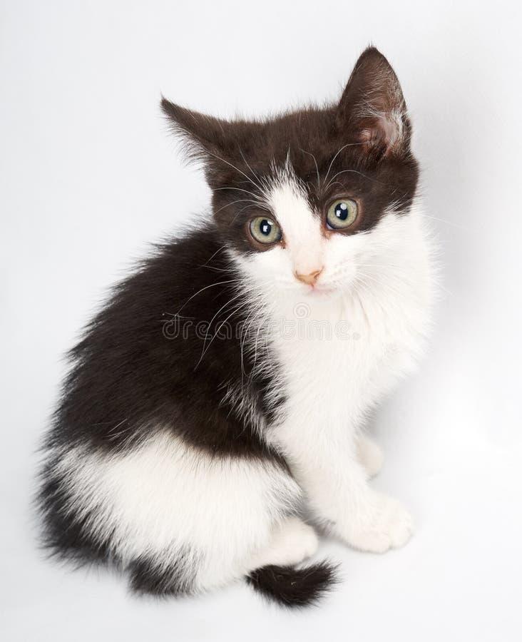 Gato blanco infinito del al del mirando del vaca del color del negro de y fotografía de archivo