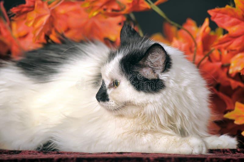 Gato blanco mullido con los puntos negros en un fondo de las hojas de otoño fotos de archivo