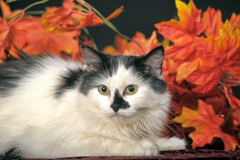 Gato blanco mullido con los puntos negros en un fondo de las hojas de otoño foto de archivo libre de regalías