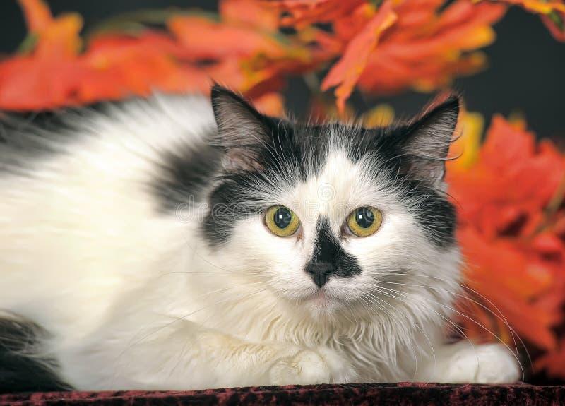 Gato blanco mullido con los puntos negros en un fondo de las hojas de otoño fotografía de archivo libre de regalías