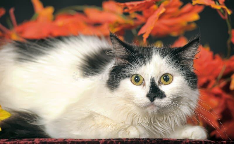 Gato blanco mullido con los puntos negros en un fondo de las hojas de otoño fotos de archivo libres de regalías