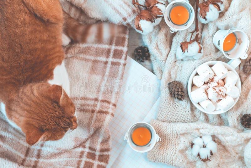 Gato blanco rojo en la tela escocesa, taza de café, ramas de la flor de la planta de algodón, libreta Fondo hermoso del invierno  fotografía de archivo libre de regalías