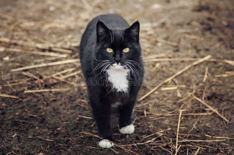Gato blanco y negro imagen de archivo libre de regalías