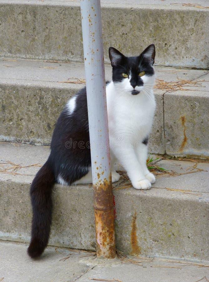 Gato blanco y negro adorable que se sienta en las escaleras imágenes de archivo libres de regalías
