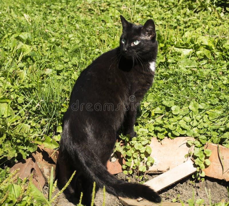 Gato blanco y negro al aire libre fotografía de archivo libre de regalías