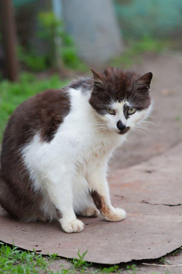 Gato blanco y negro de la calle foto de archivo