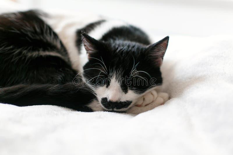 Gato blanco y negro dulce que descansa sobre la cama, durmiendo por mañana Momento suave, cómodo y acogedor Gato soñoliento que a fotografía de archivo libre de regalías