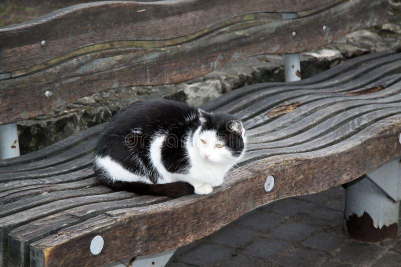 Gato blanco y negro en el banco en Riga foto de archivo