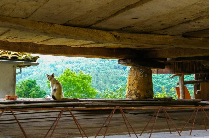 Gato blanco y negro en un trabajo, debajo del tejado, viendo el mounta imagen de archivo libre de regalías
