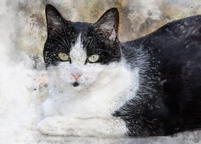 Gato blanco y negro lindo con los ojos grandes imágenes de archivo libres de regalías