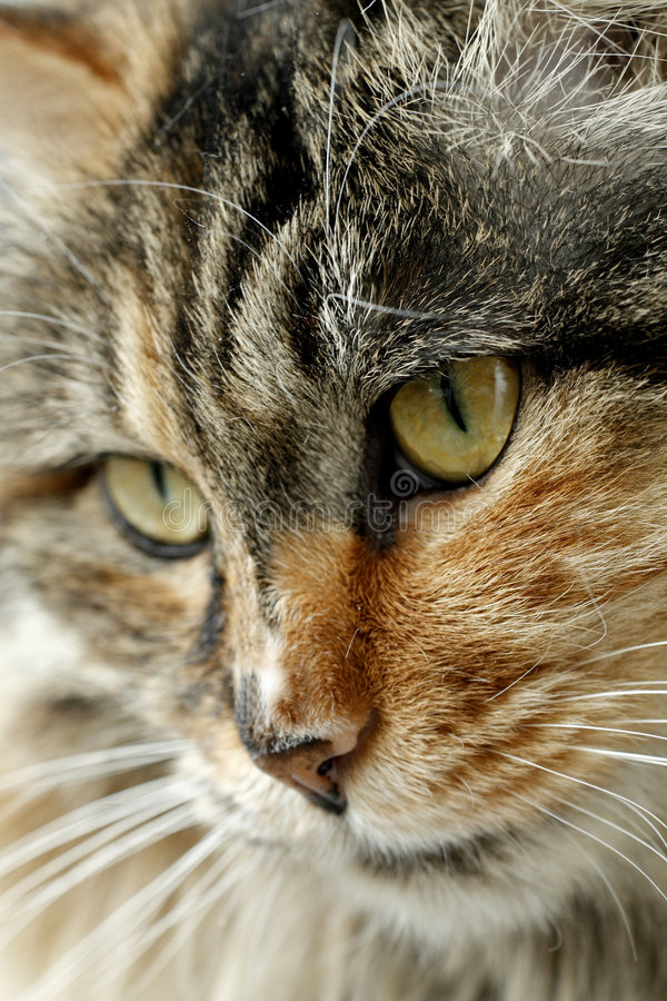 Gato bonito. imagens de stock royalty free