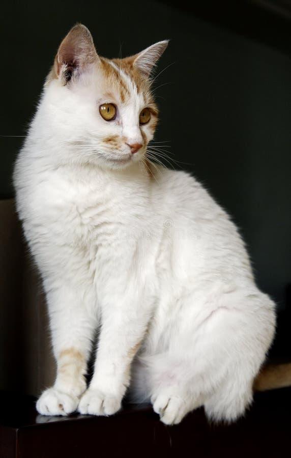 Gato bonito. foto de stock