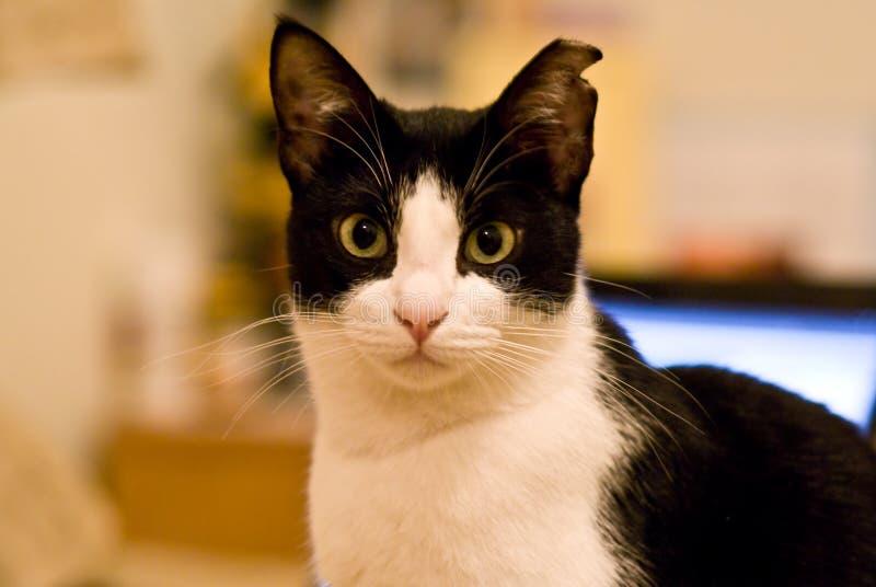 gato bonito foto de stock