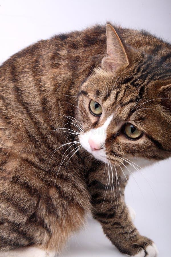 Gato bonito. fotografia de stock