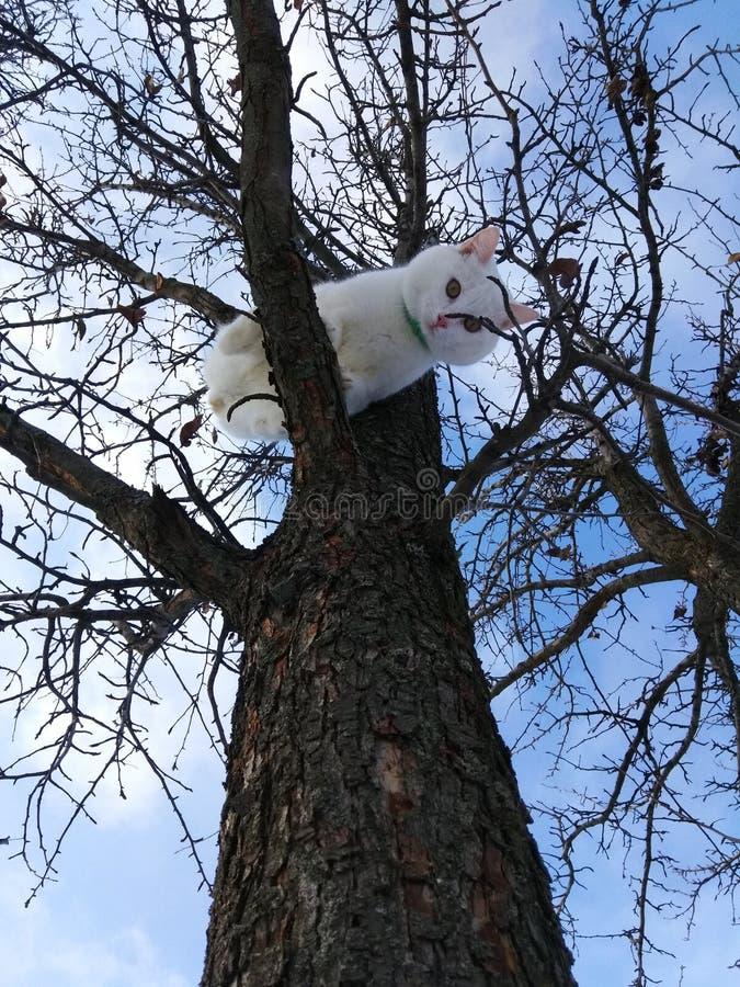 Gato bonito branco em um ramo de árvore fotografia de stock
