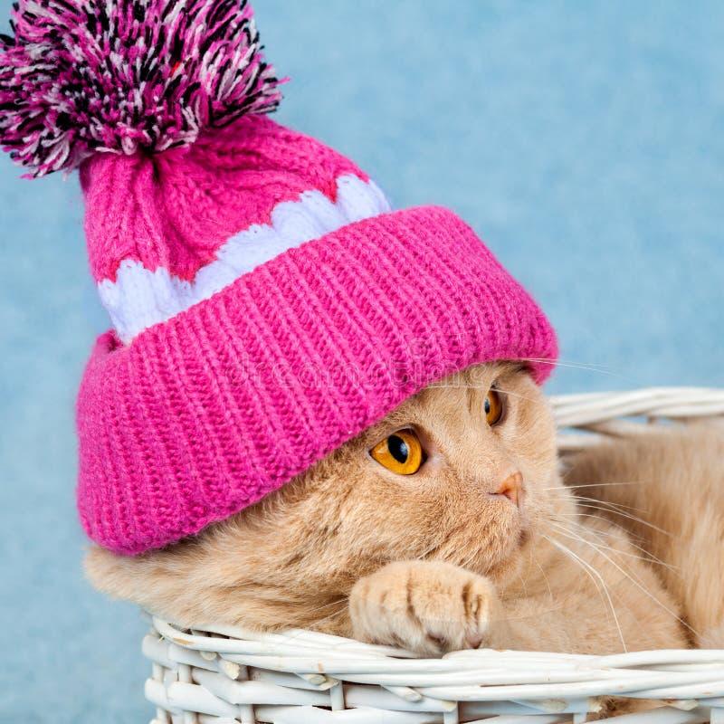 Gato bonito, chapéu feito malha vestindo com pompom fotografia de stock