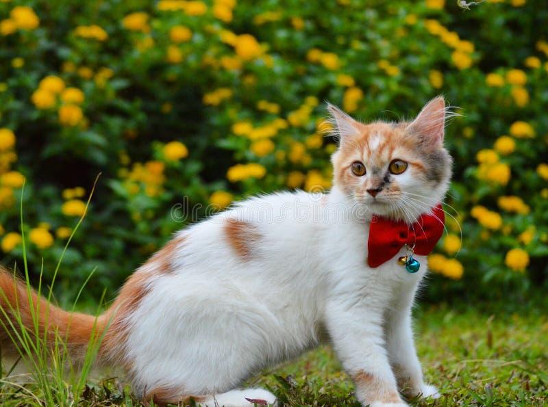 Gato bonito com borboleta da fita fotografia de stock