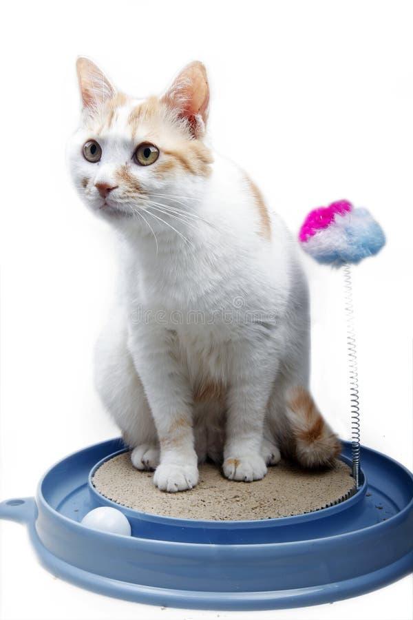 Gato bonito com brinquedo fotografia de stock royalty free