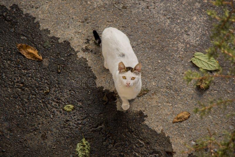 Gato bonito como o animal doméstico na vista imagem de stock
