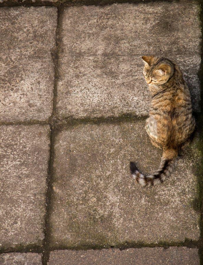 Gato bonito como o animal doméstico na vista imagens de stock